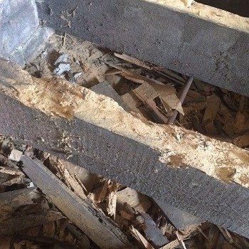 Woodworm affecting a floor in Leeds