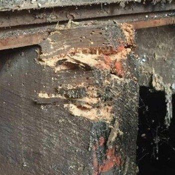 Woodworm Barnsley