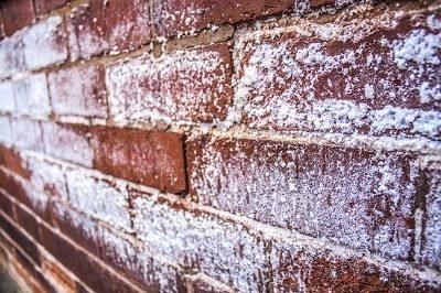 salt-damp-wall-huddersfield-white owder